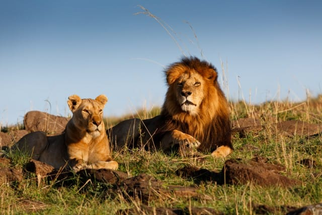 come-evitare-estinzione-animali