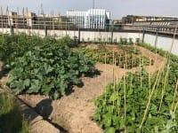 Orti sui tetti delle case popolari, il verde urbano non può essere un'esclusiva dei ricchi (foto)