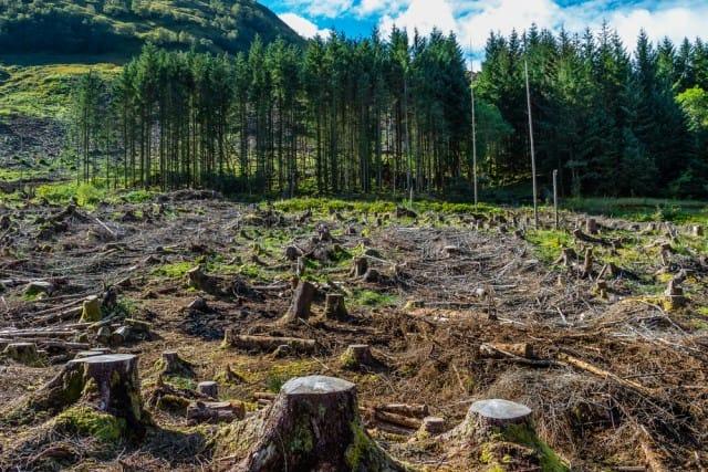 EFFETTI DEI CAMBIAMENTI CLIMATICI6