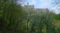Bosco di San Francesco, un'oasi verde per scoprire il silenzio e la natura (foto)