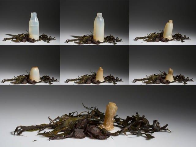 bottiglie-da-alghe-rosse (2)