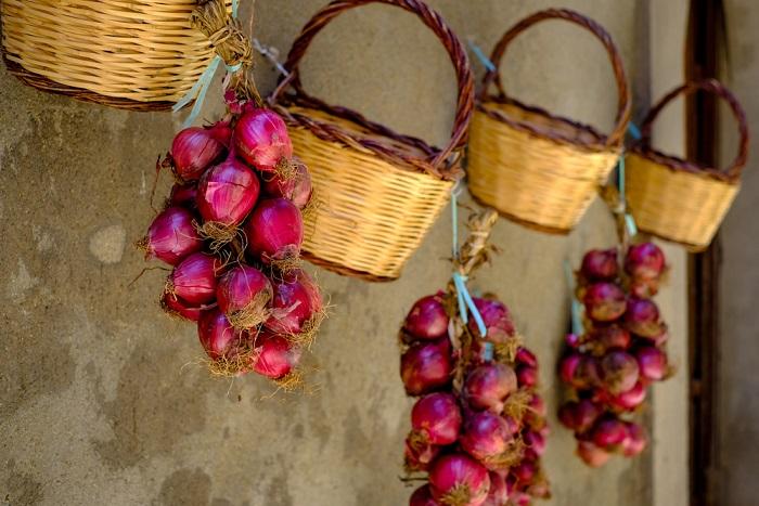 come si coltivano le cipolle