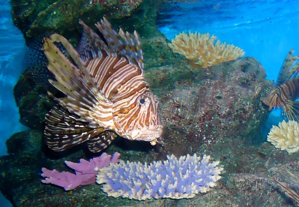 importanza degli oceani