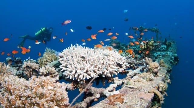 importanza oceani
