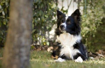 come misurare l'intelligenza dei cani
