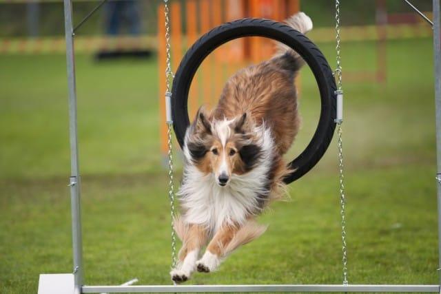 come-misurare-intelligenza-cani (3)