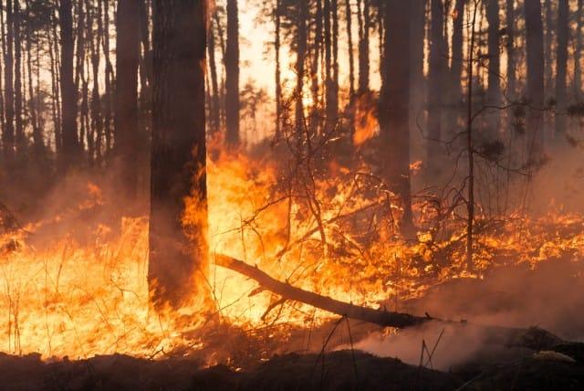 come-prevenire-gli-incendi-boschivi-con-la-bella-stagione (1)
