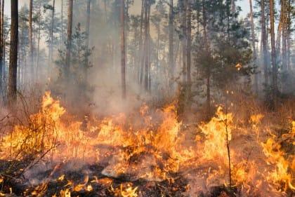 come prevenire gli incendi boschivi