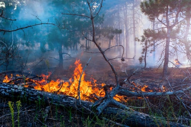 incendi-criminalita-italia (5)