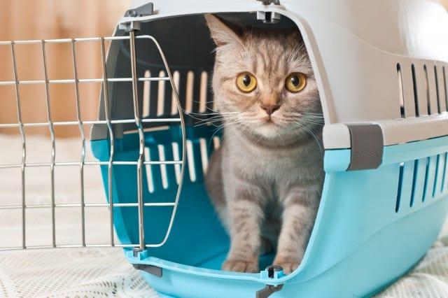 viaggiare-animali-domestici (2)