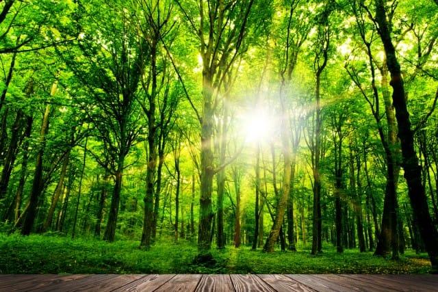 Specie alberi mondo1