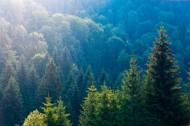 Specie alberi mondo3