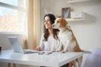 In ufficio con il proprio cane: le aziende italiane in cui è possibile e i vantaggi per i dipendenti