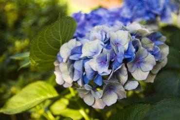 dieci migliori fiori di fine estate
