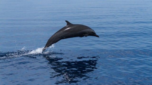 isola-atauro-biodiversita-specie-marine (2)