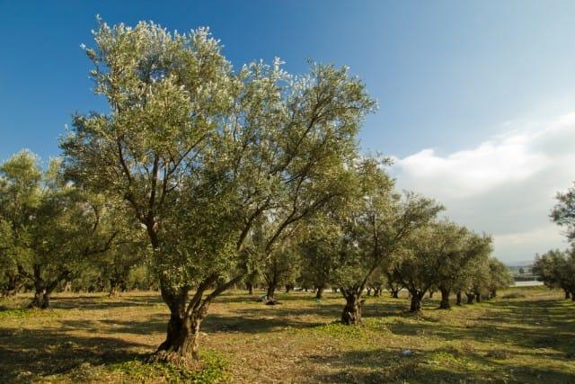 The Walking Trees, la mostra fotografica dedicata alla bellezza e alla tutela degli ulivi (foto)