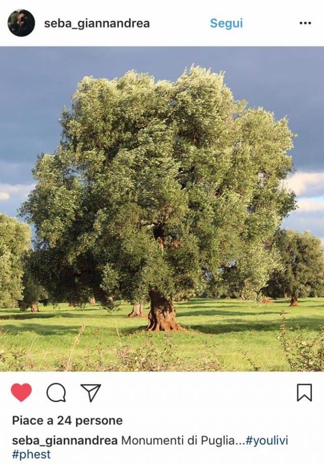 mostra-fotografica-sugli-ulivi (3)