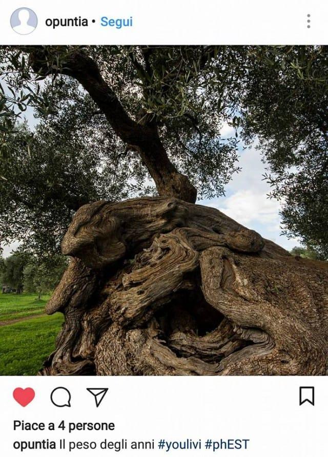 mostra-fotografica-sugli-ulivi (4)