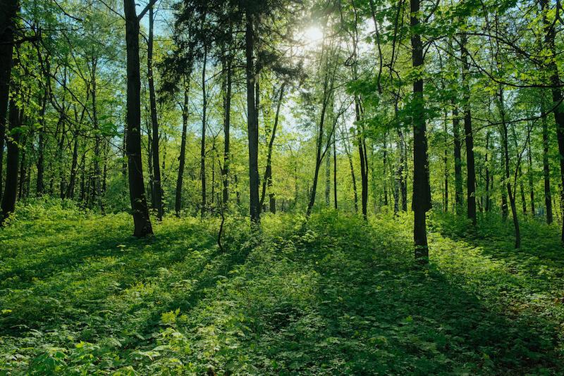pulizia dei boschi