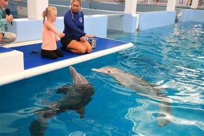 Ellie, la bambina disabile che ha imparato a nuotare grazie a Winter, un delfino senza coda