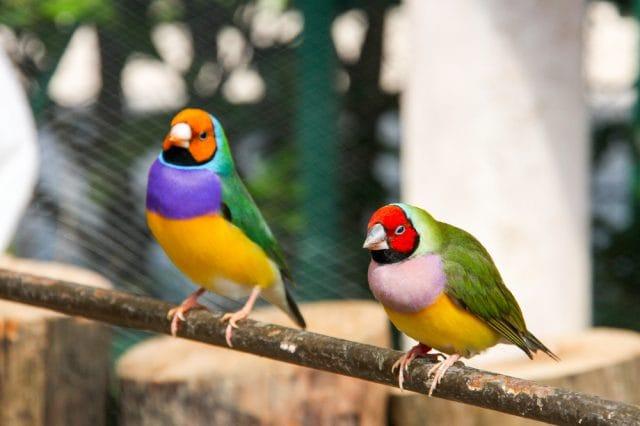 Bracconaggio e vendita illegale di uccelli: ma i cacciatori non hanno nulla da dire? (video)