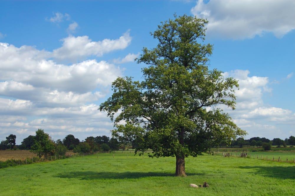Importanza degli alberi in citt non sprecare - Piante antismog ...