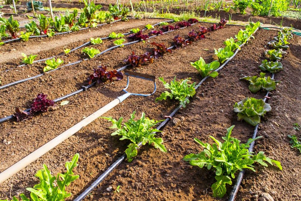 risparmio idrico irrigazione a goccia