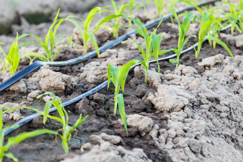 Risparmio idrico irrigazione a goccia non sprecare for Gocciolatori per irrigazione a goccia