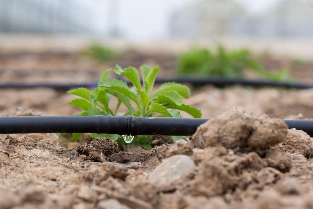 risparmio idrico irrigazione a goccia non sprecare