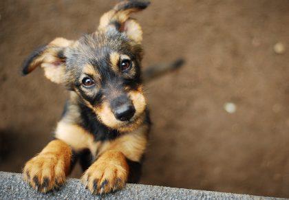 Gli occhi dei cani: vedono solo blu, giallo e bianco. Ma al buio funzionano meglio dei nostri