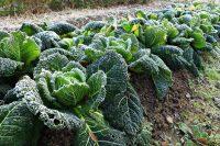 Orto a dicembre, avanti con la semina di ortaggi. Ma solo in spazi protetti. Magari riciclando vecchi cassoni