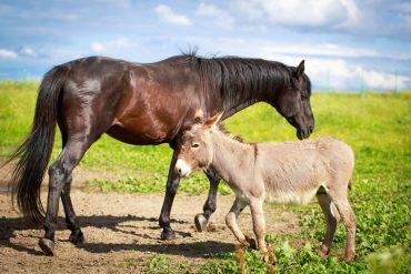 cavalli abbandonati in italia