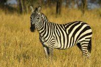 I colori degli animali, a ciascuna specie la sua tinta. Innanzitutto per difendersi
