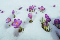 La neve protegge le piante, crea una preziosa riserva idrica e aiuta i lombrichi a lavorare