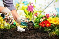 Diserbanti naturali per l'orto, ecco i migliori. Dall'aceto al bicarbonato di sodio (foto)