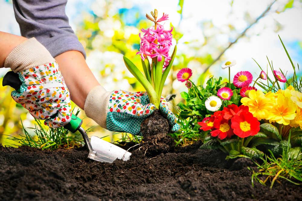 diserbanti naturali per orto