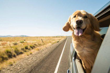 I cani sentono più degli uomini. Ascoltano tra 35mila e 40mila vibrazioni al secondo