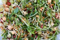 Insalata di germogli, la ricetta di un contorno povero di calorie e ricco di proprietà importanti