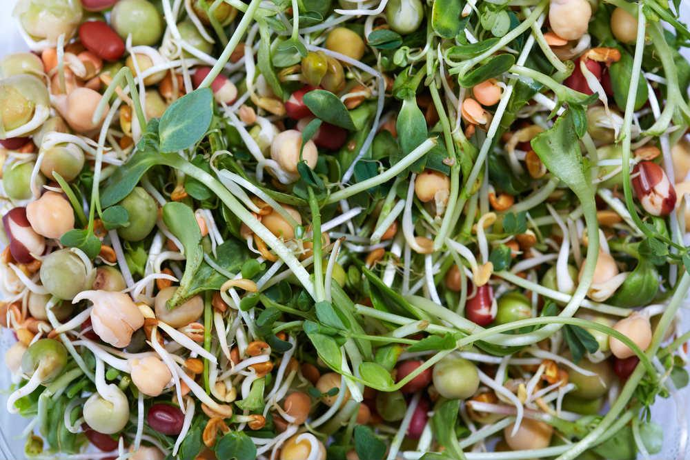 ricetta insalata di germogli
