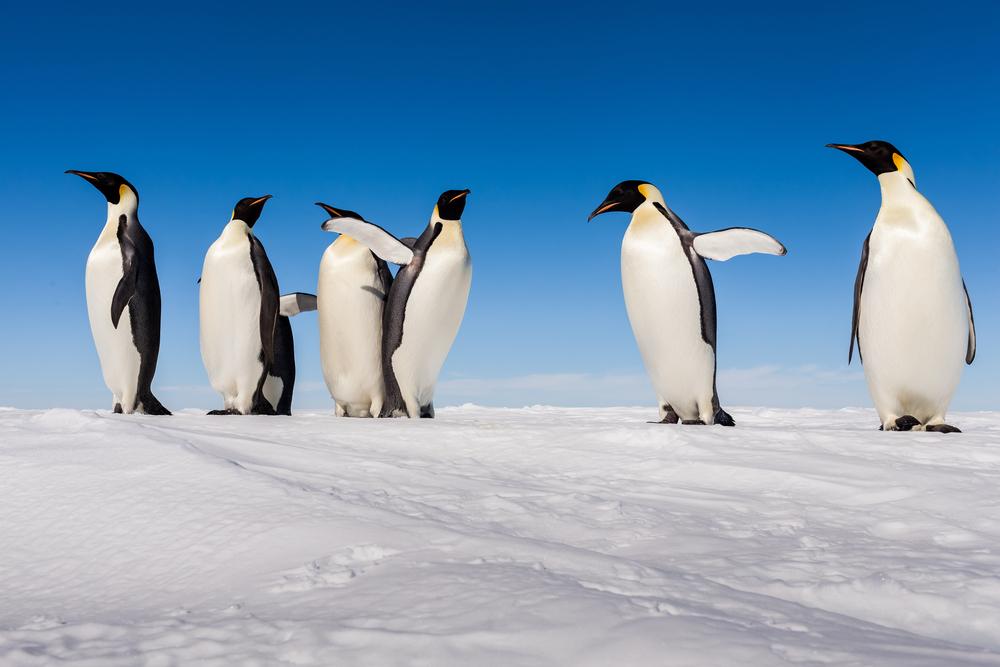 scoperta colonia pinguini