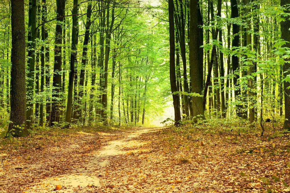 benefici di camminare nei boschi