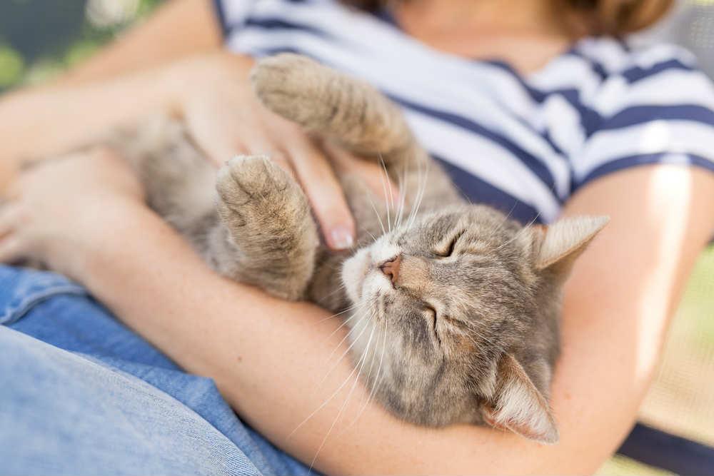 come coccolare il gatto