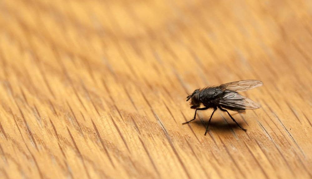 rimedi naturali mosche