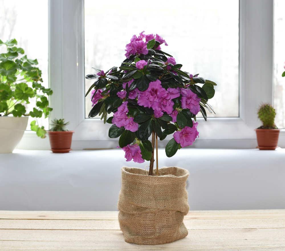 piante arredamento bagno