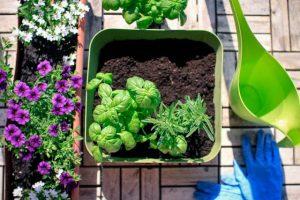 come coltivare orto in casa sul balcone