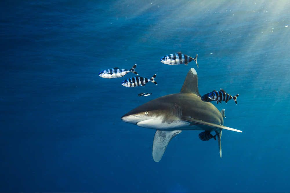 come evitare attacco di uno squalo