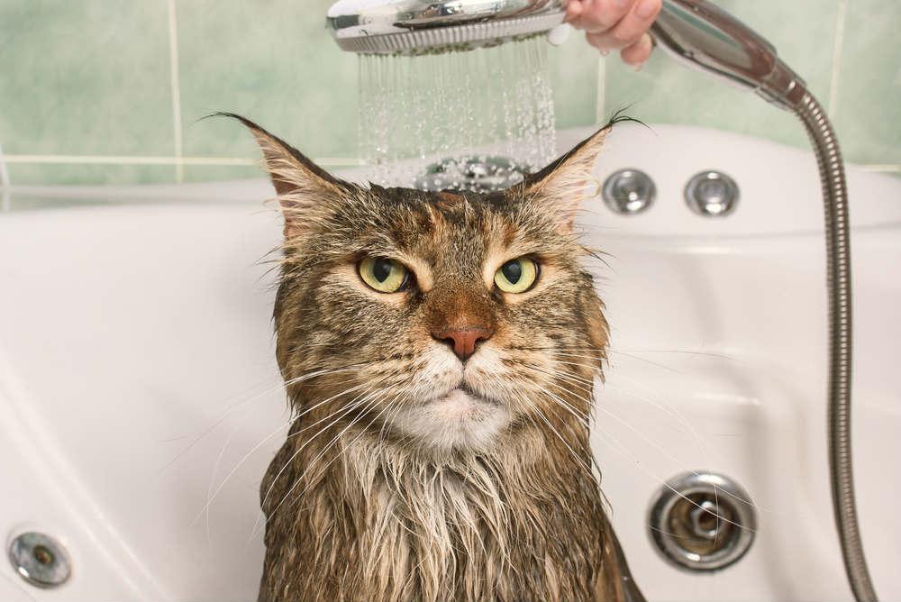 come fare il bagno a un gatto