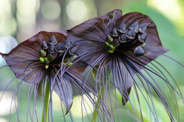Fiori insoliti, i 10 più belli e più originali. Per gli interni della casa o per il giardino