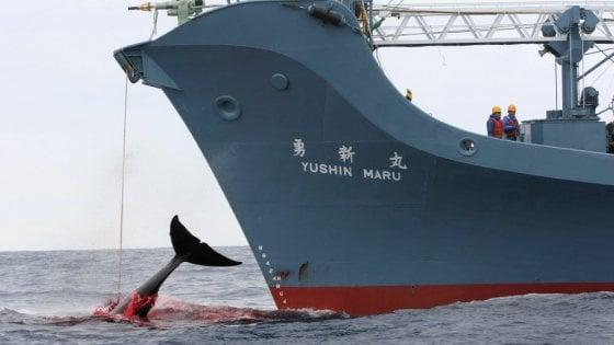 strage di balene