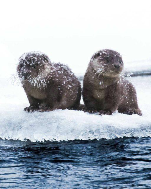 fotografi di animali ossi saarinen